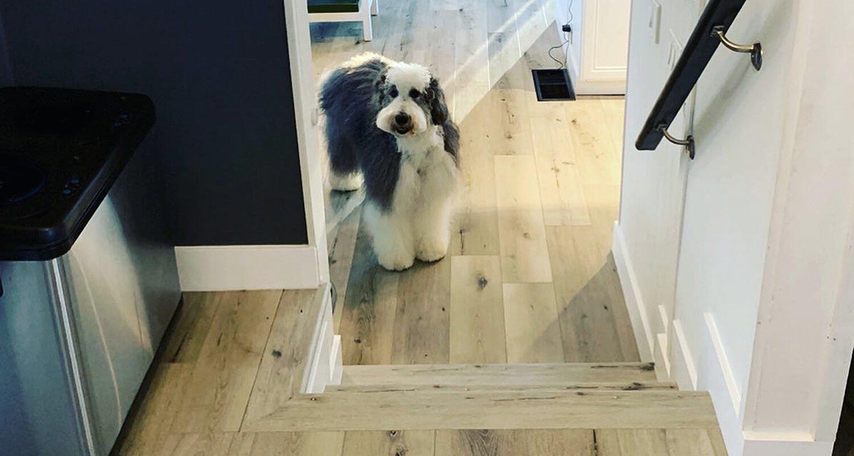 SoCal Flooring and Carpet